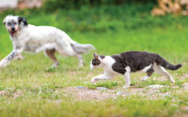 cat-dog-contact-uber