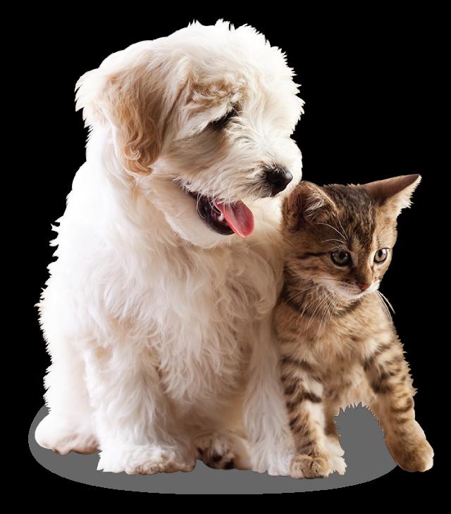 Hudson Veterinary Hospital Pet Resort and Spa | Ossining, NY