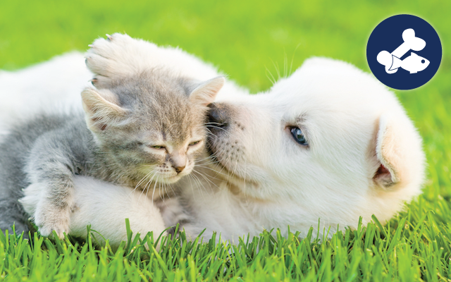 Puppy and Kitten in Grass