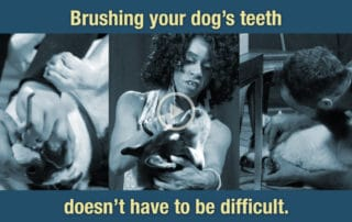 Brushing Your Dogs Teeth Doesn't Have To Be Difficult