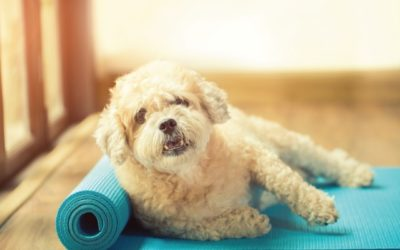 Dog with Yoga Mat