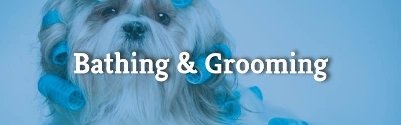 Bathing & Grooming - Dog in Rollers