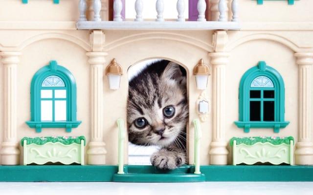 Cat peeking in Castle