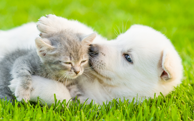 Kitten and Puppy in grass